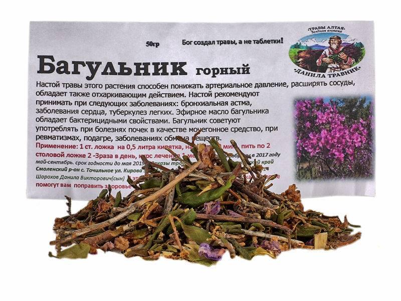 Багульник болотный — лечебные свойства и противопоказания, показания к применению