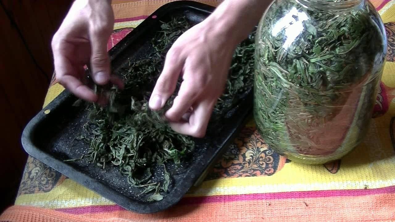 Как собирать и правильно сушить иван-чай в домашних условиях: основные методы сушки и ферментации