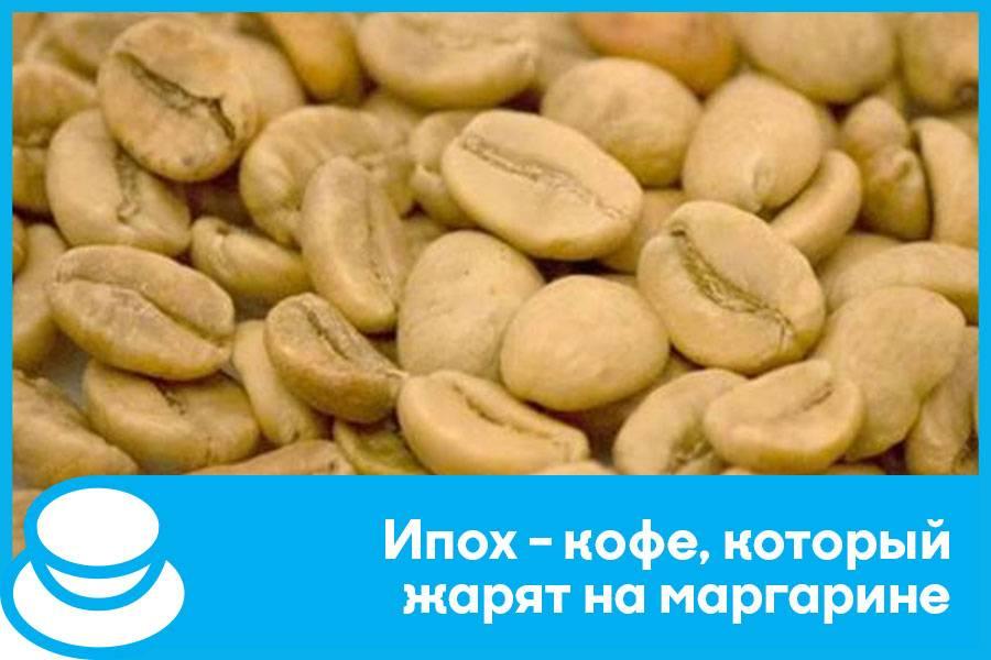 Белый кофе - особенности вкуса, чем отличаются белые кофейные зерна