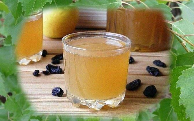 Квас из берёзового сока в домашних условиях: лучшие рецепты