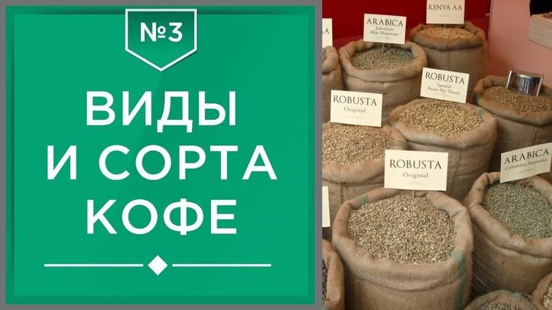 Сорта кофе. краткий путеводитель в увлекательном мире.