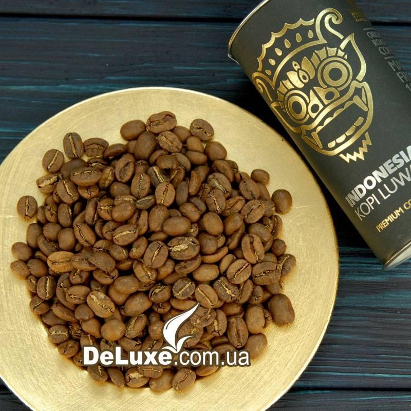 Кофе лювак - что это такое и какое животное помогает при производстве