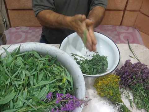 Иван-чай - как собирать и сушить, способы правильного приготовления на зиму и употребления