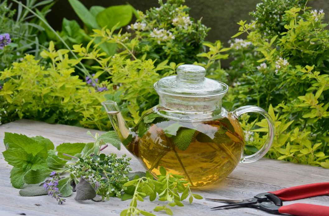 Настойка акации на спирту (самогоне) — польза для здоровья