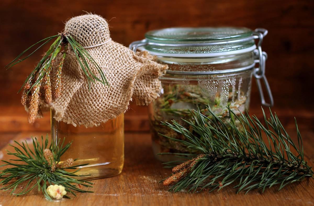 Чай и варенье их хвои: рецепты и лечебные свойства