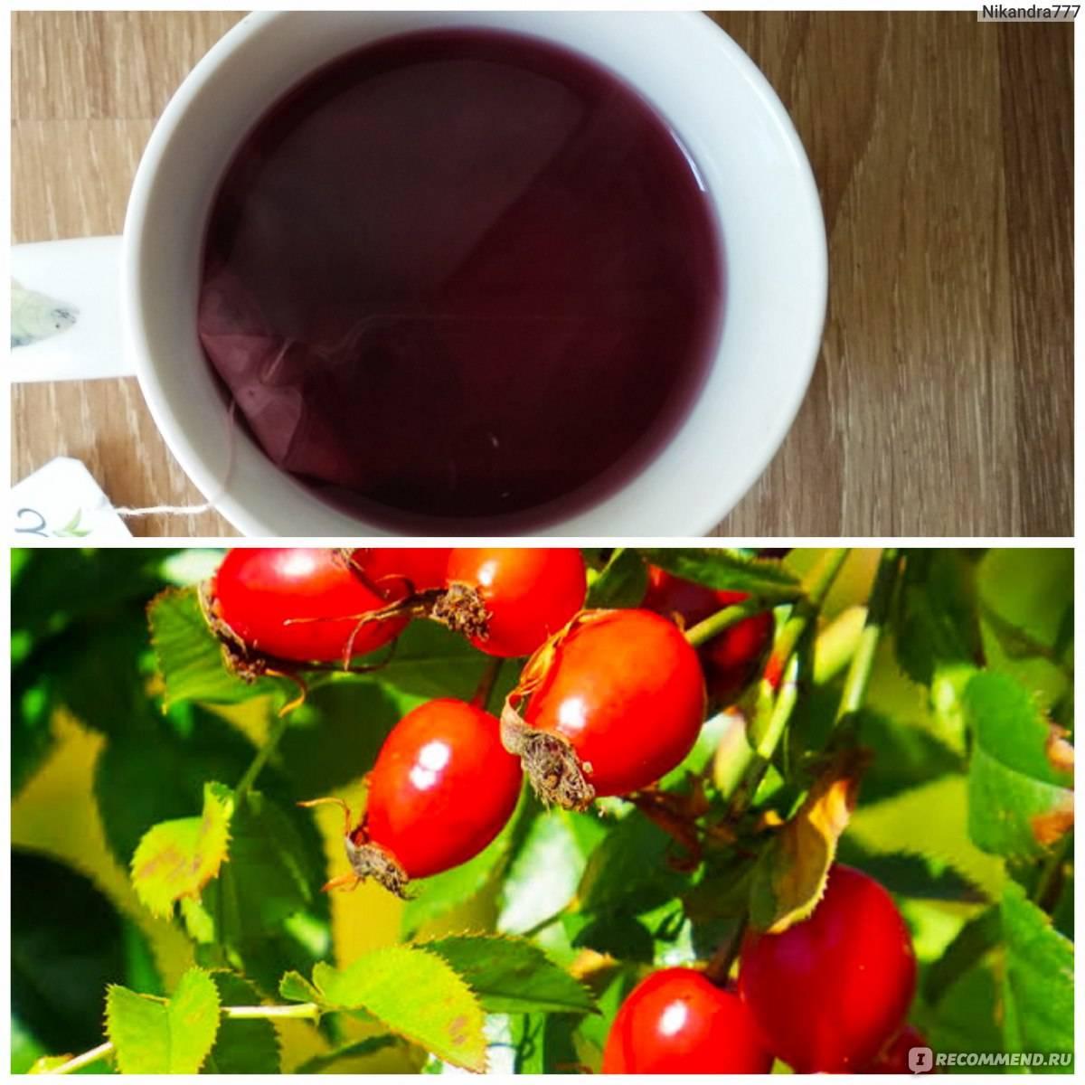 Чай с шиповником: полезные свойства и противопоказания