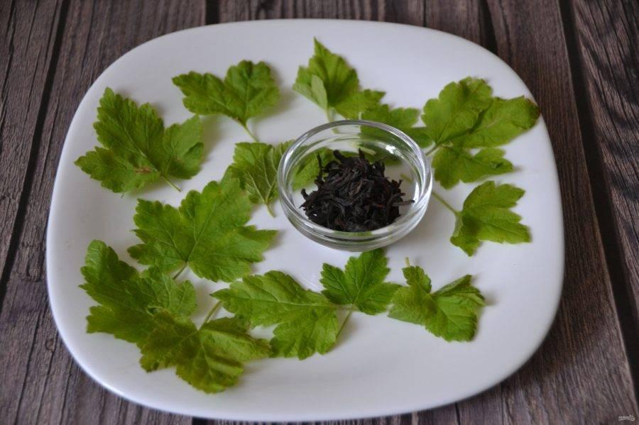 Польза и вред листьев черной смородины, как применять