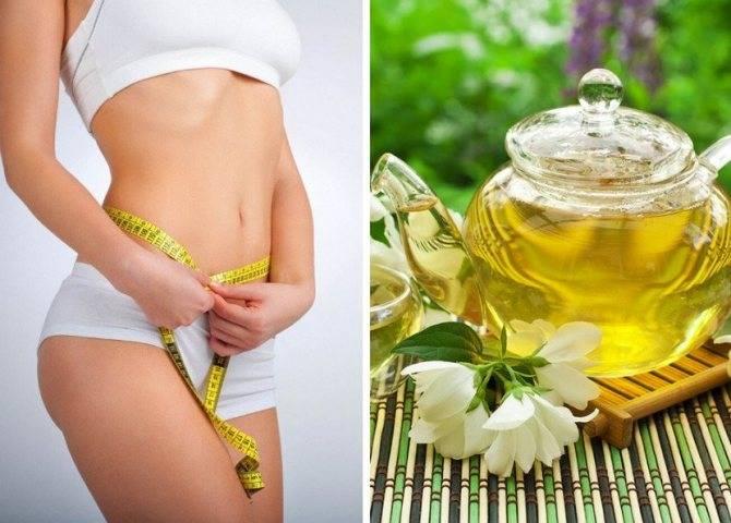Польза и вред зеленого жасминового чая, обзор свойств. как собирать, сушить и заготавливать жасмин для чая