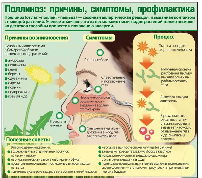Аллергия на кофе: причины, симптомы, лечение