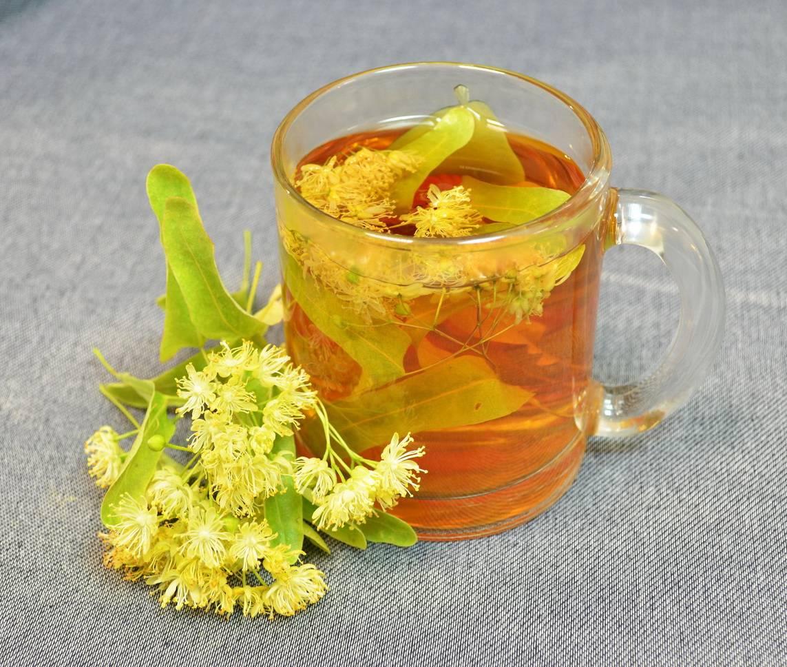 Чай из хризантемы: польза и вред, как заваривать хризантемовый чай