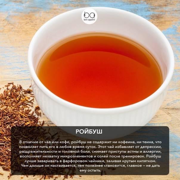 Габа чай - полезные свойства, советы заваривания