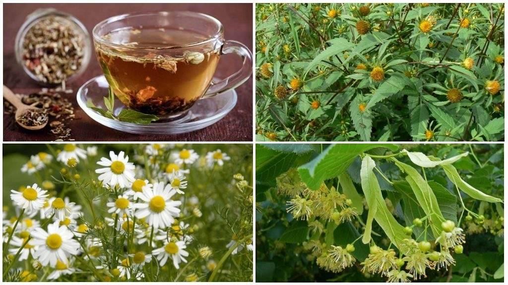 Как приготовить чай из ромашки   справочник садовской