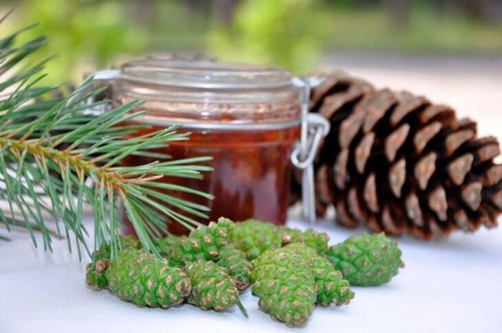 Чай из хвои: замечательное витаминное средство