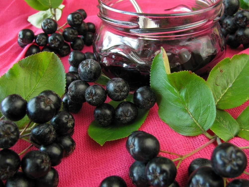 Черноплодная рябина – лечебные свойства и противопоказания: польза, вред и что с ней делать – лучшие рецепты