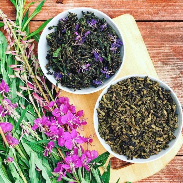 Копорский чай (иван-чай): полезные свойства и противопоказания напитка, как правильно его пить?