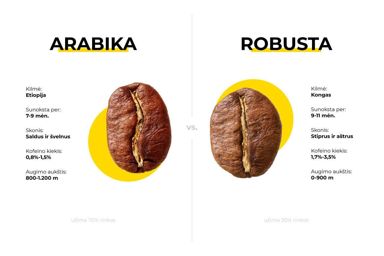 Арабика и робуста - различия