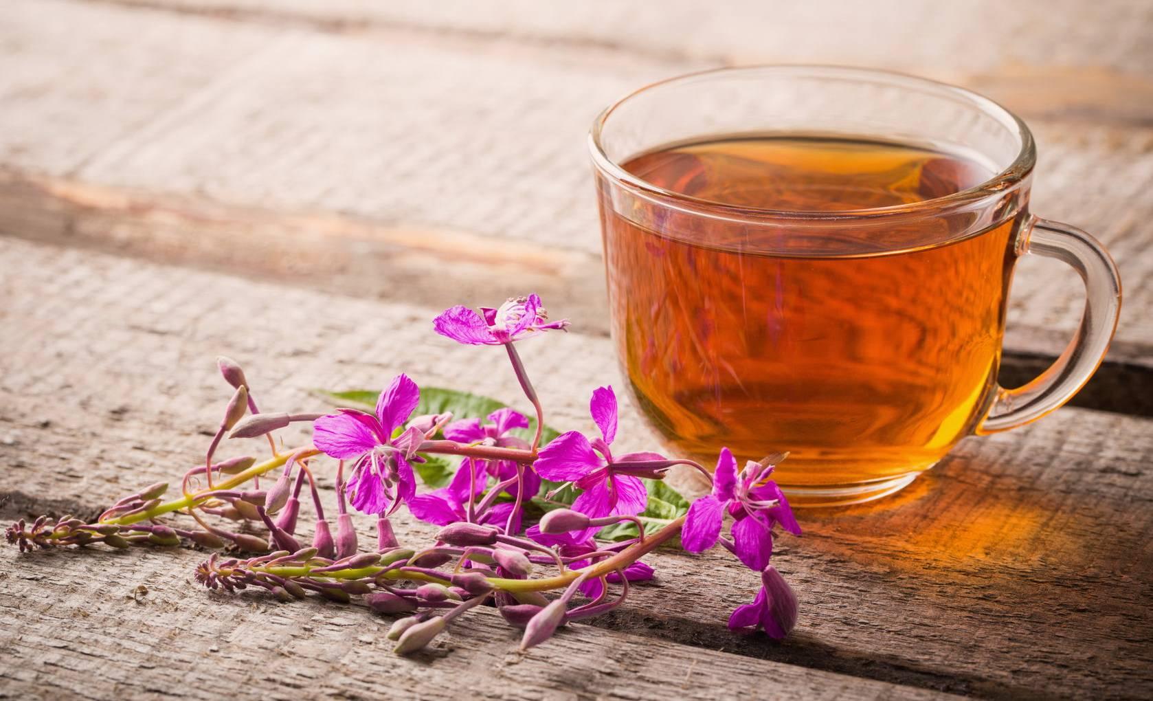 Иван-чай при сахарном диабете 2 типа – описание растения, показания, противопоказания, клиническая эффективность и полезные свойства