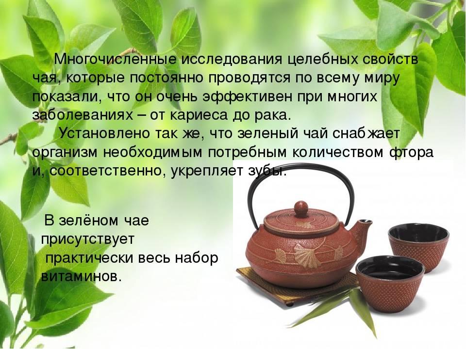 Зеленый чай — полезные свойства и противопоказания