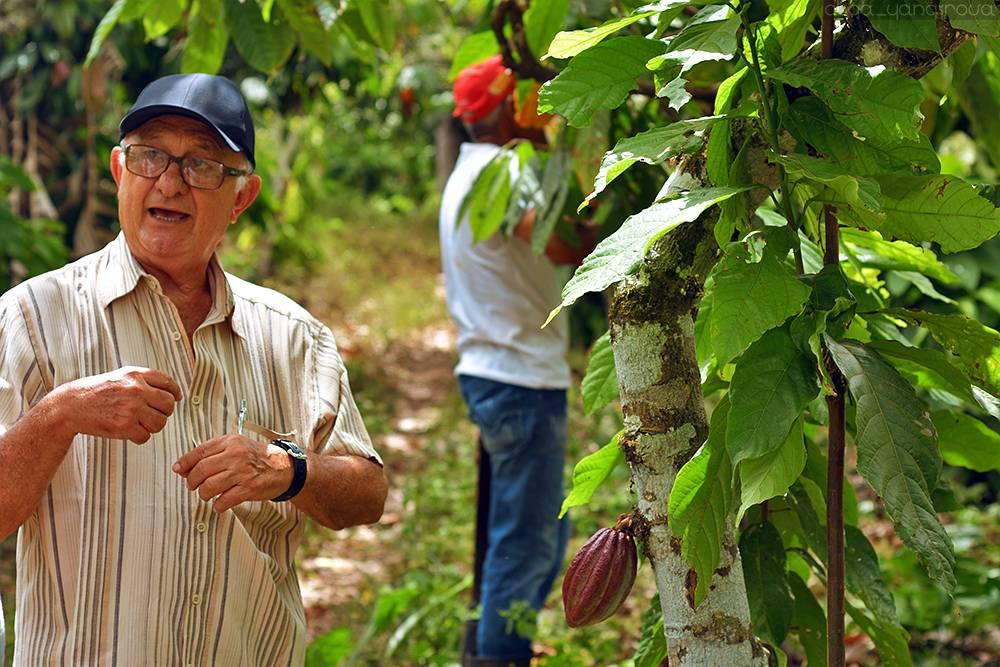 Где растет орех макадамия и как он выглядит, страна произрастания где растет орех макадамия и как он выглядит, страна произрастания