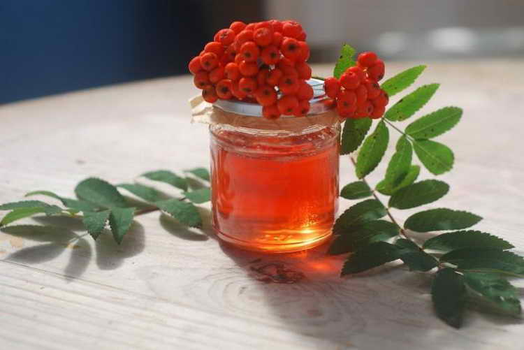Красная рябина: польза и вред, лечебные свойства, что приготовить. рецепты народной медицины и применение в косметологии