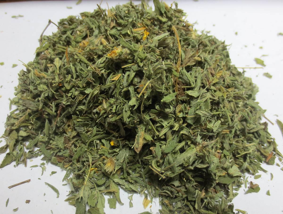Курильский чай (лапчатка): лечебные свойства, особенности лекарственной  травы