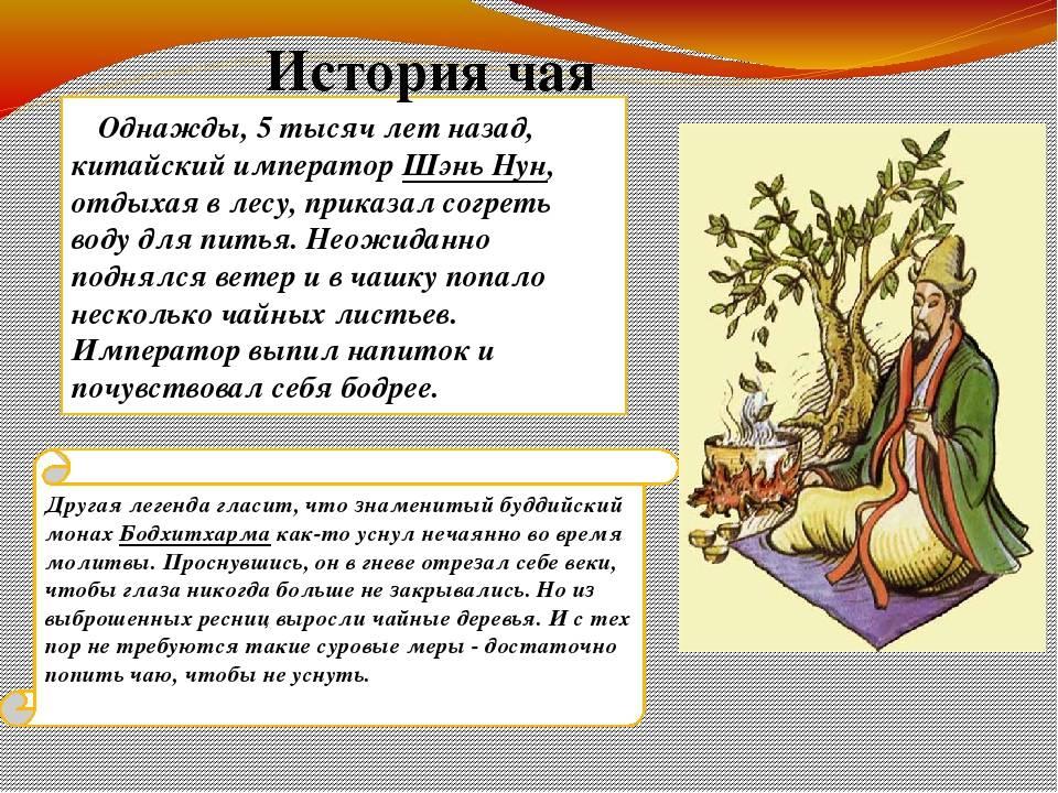 История чая — с древних времен до наших дней