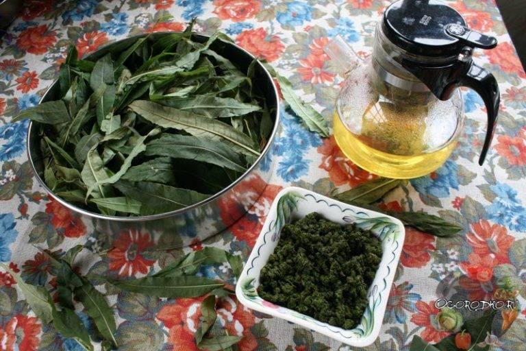 Копорский чай, иван-чай, кипрей узколистный, польза и вред - траварт