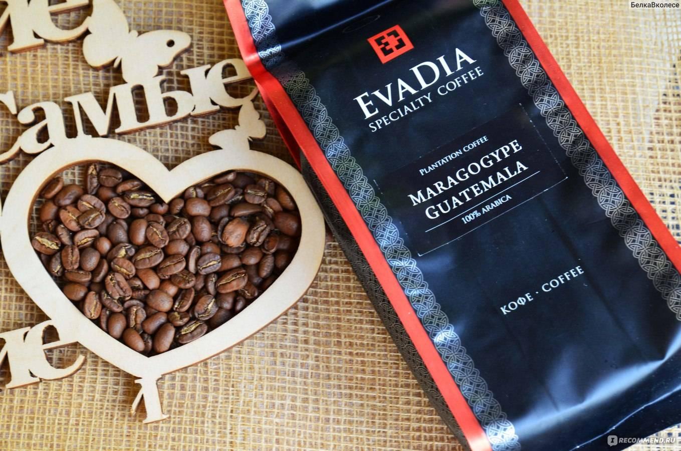 Кофе марагоджип – пищевые характеристики и вкусовые качества. страна произрастания, способ культивации и обработки