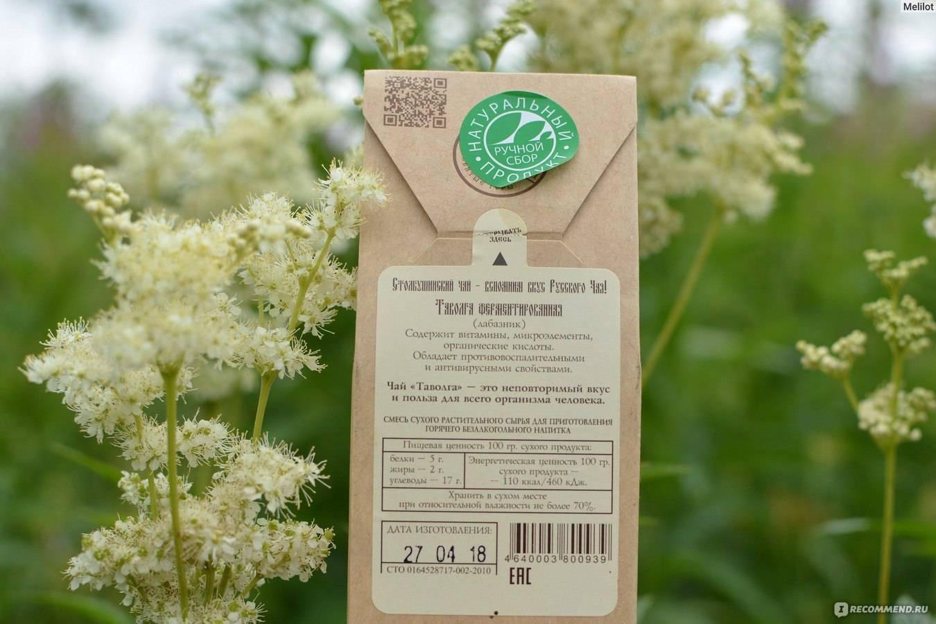 Трава лабазник – лечебные свойства таволги и 9 эффективных рецептов