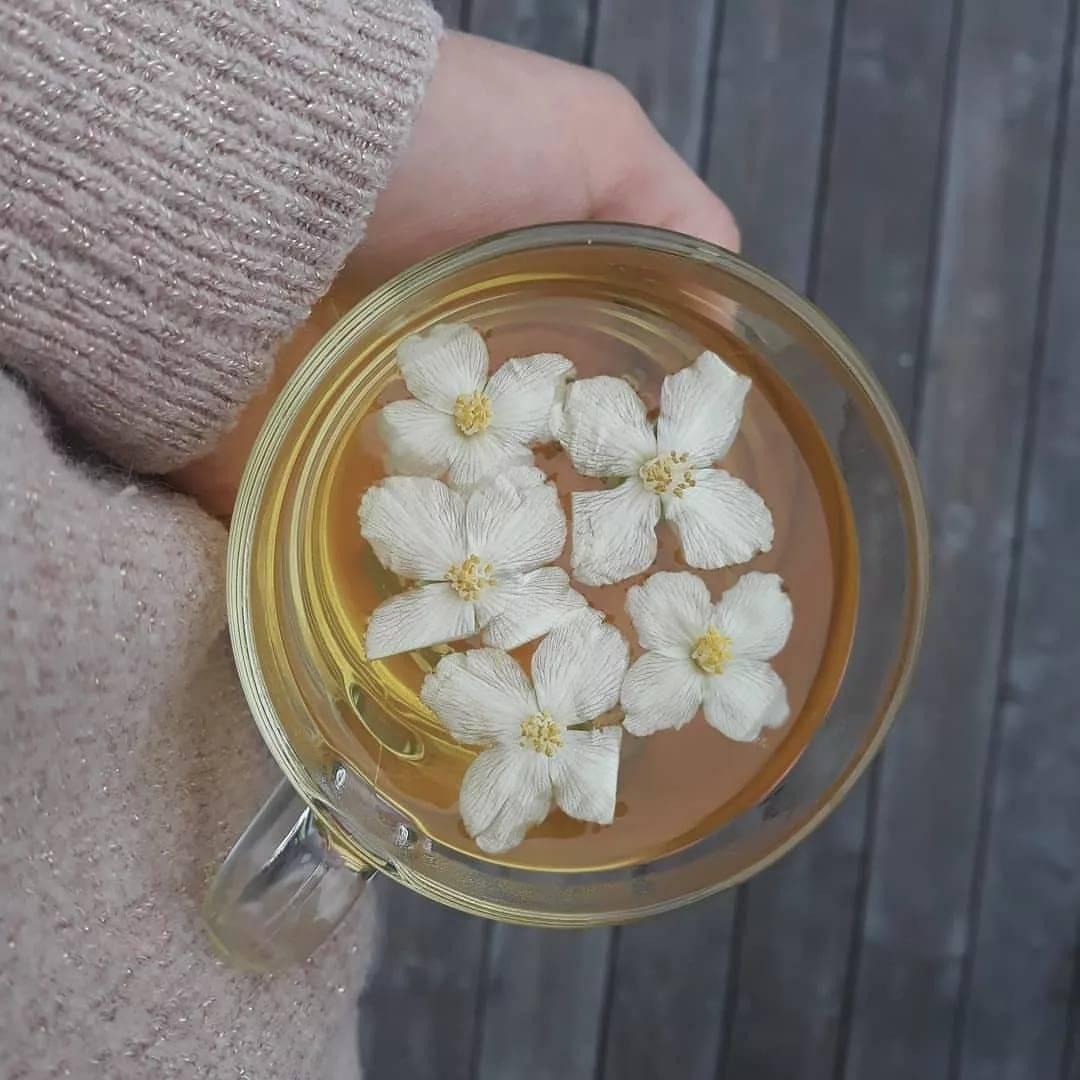 Рецепт зеленого чая с жасмином с максимальной пользой