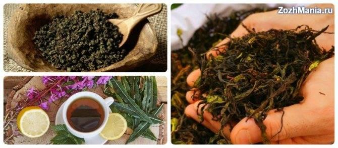 «копорский» чай – лечебный напиток домашнего приготовления. иван-чай, кипрей. полезные свойства — ботаничка.ru