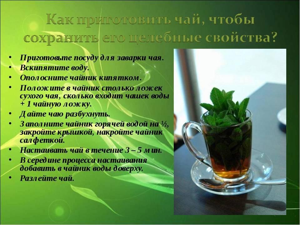 Чай из мяты лечебные свойства и противопоказания, польза и вред при беременности