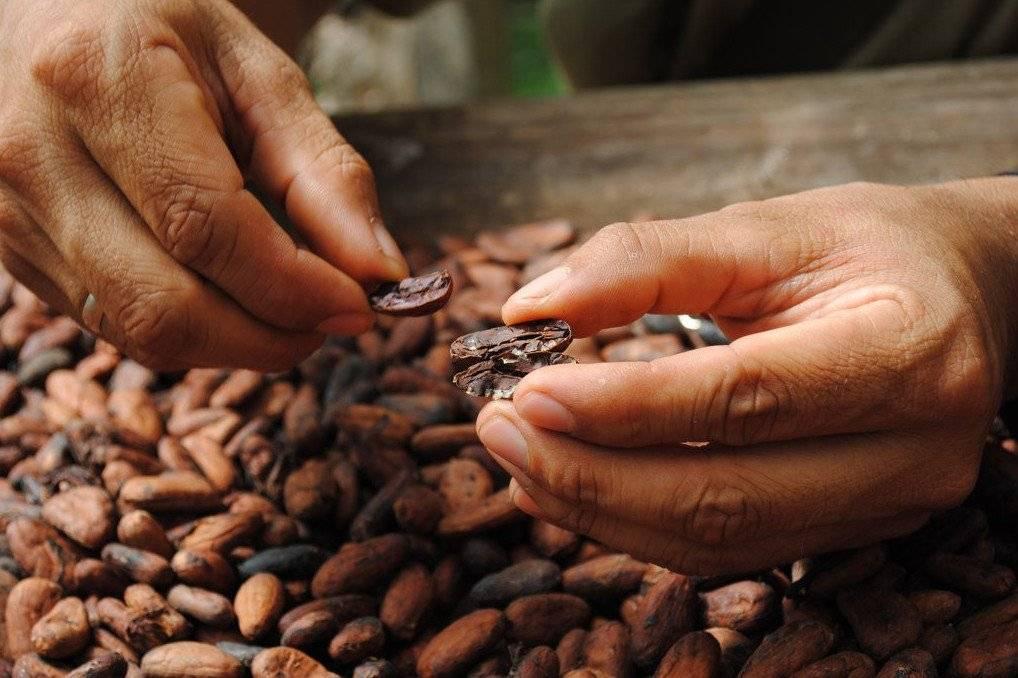 Польза и вред какао с молоком для женщин и мужчин: свойства для здоровья организма