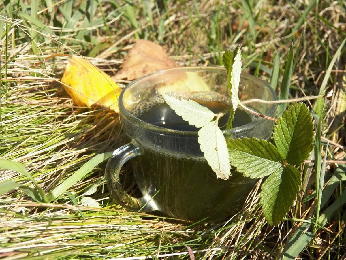 Чай из листьев земляники польза и вред