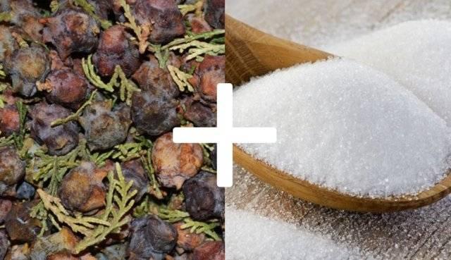 Полезные свойства туи, как и когда принимать вечнозеленое дерево