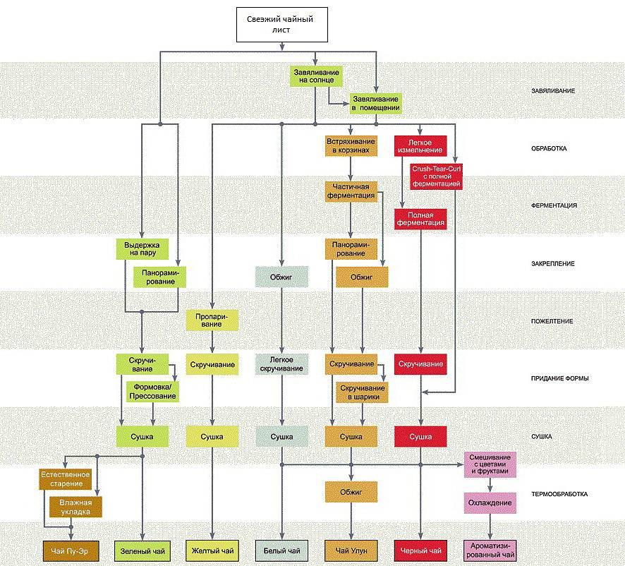 Как делают черный чай: описание поэтапного производства
