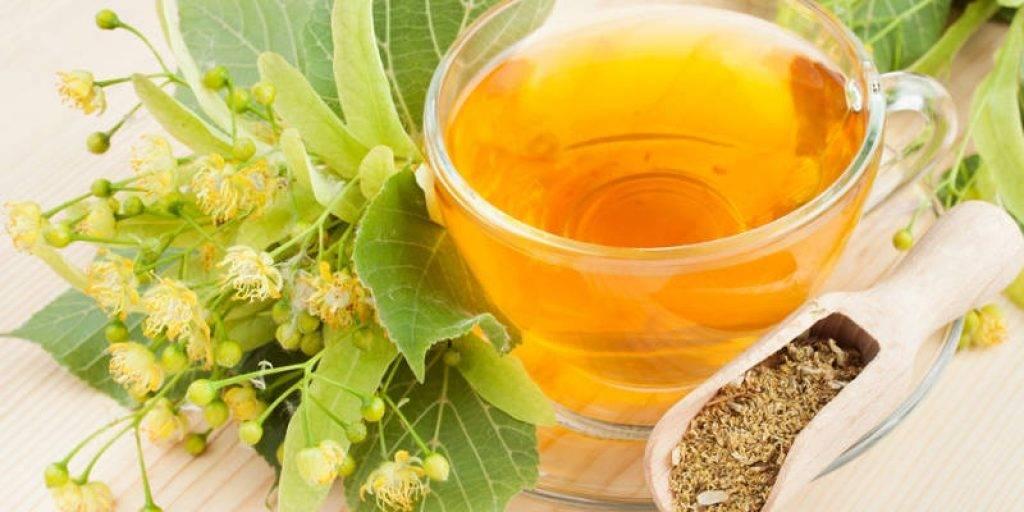 Можно ли пить иван-чай при беременности на ранних и поздних сроках