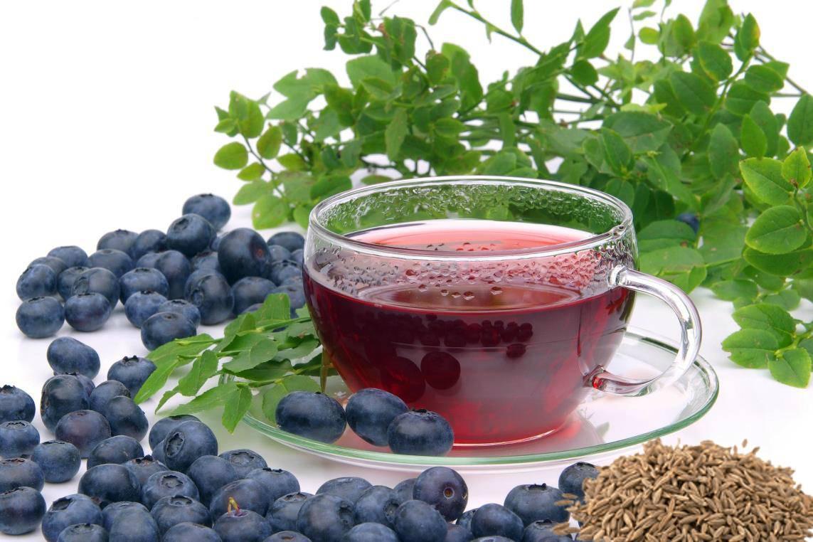Черничный чай: польза, вред, заготовка сырья, рецепты напитка