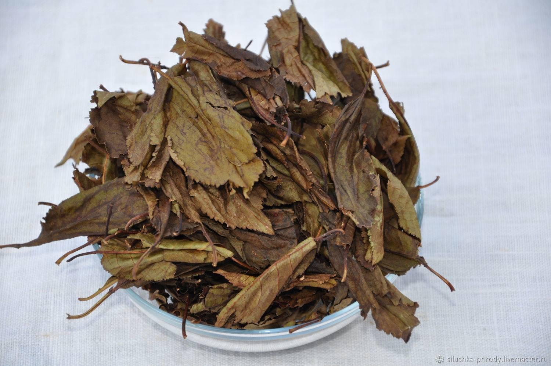Листья черешни лечебные свойства - saenta.ru