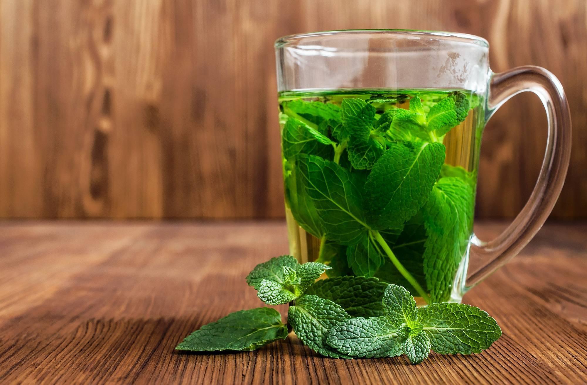 Чай с мятой (зеленый, черный, травяной): польза и вред, сбор и заготовка мяты для чая, рецепты