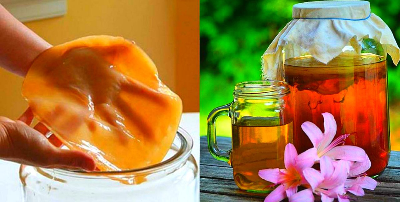 Как вырастить чайный гриб с нуля в домашних условиях- рецепты комбучи