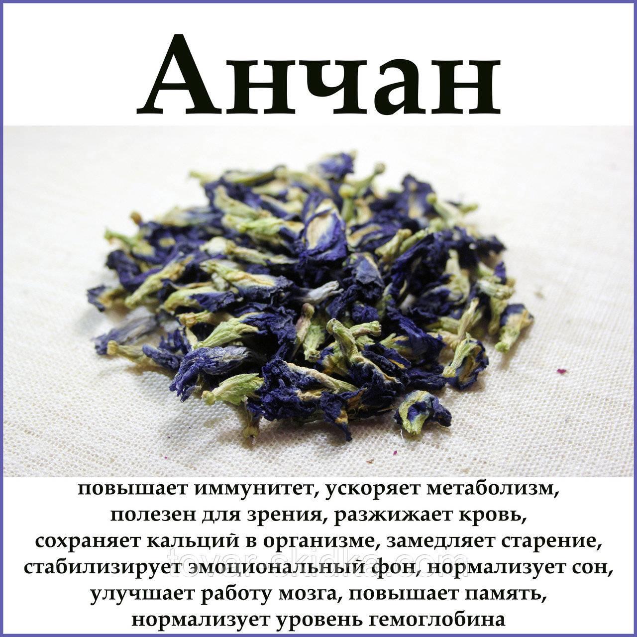 Синий чай из таиланда: полезные свойства и противопоказания, польза и вред