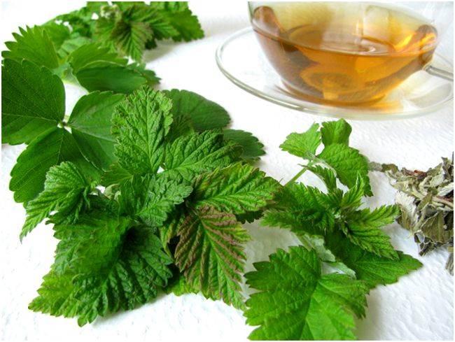 Свойства чая из листьев малины и рецепты