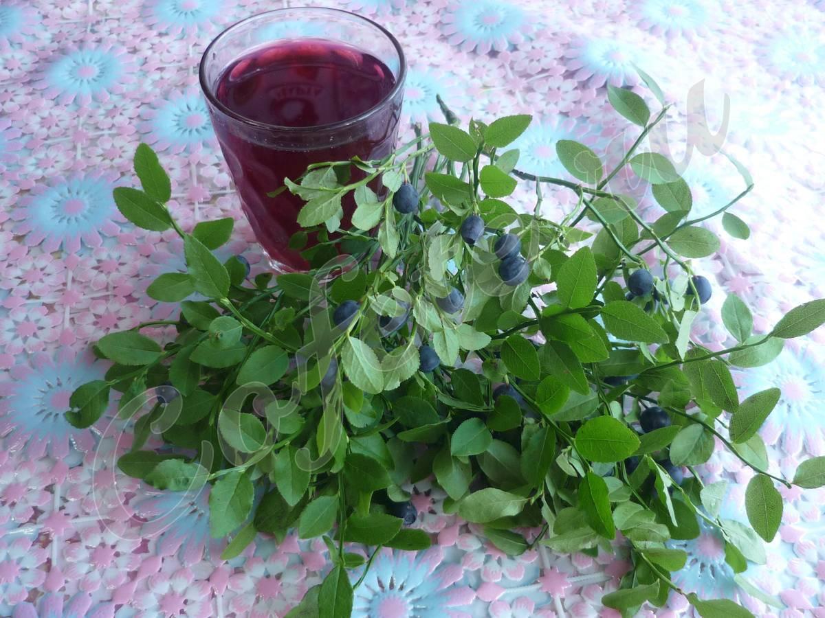 Лечебные свойства листьев черники для организма