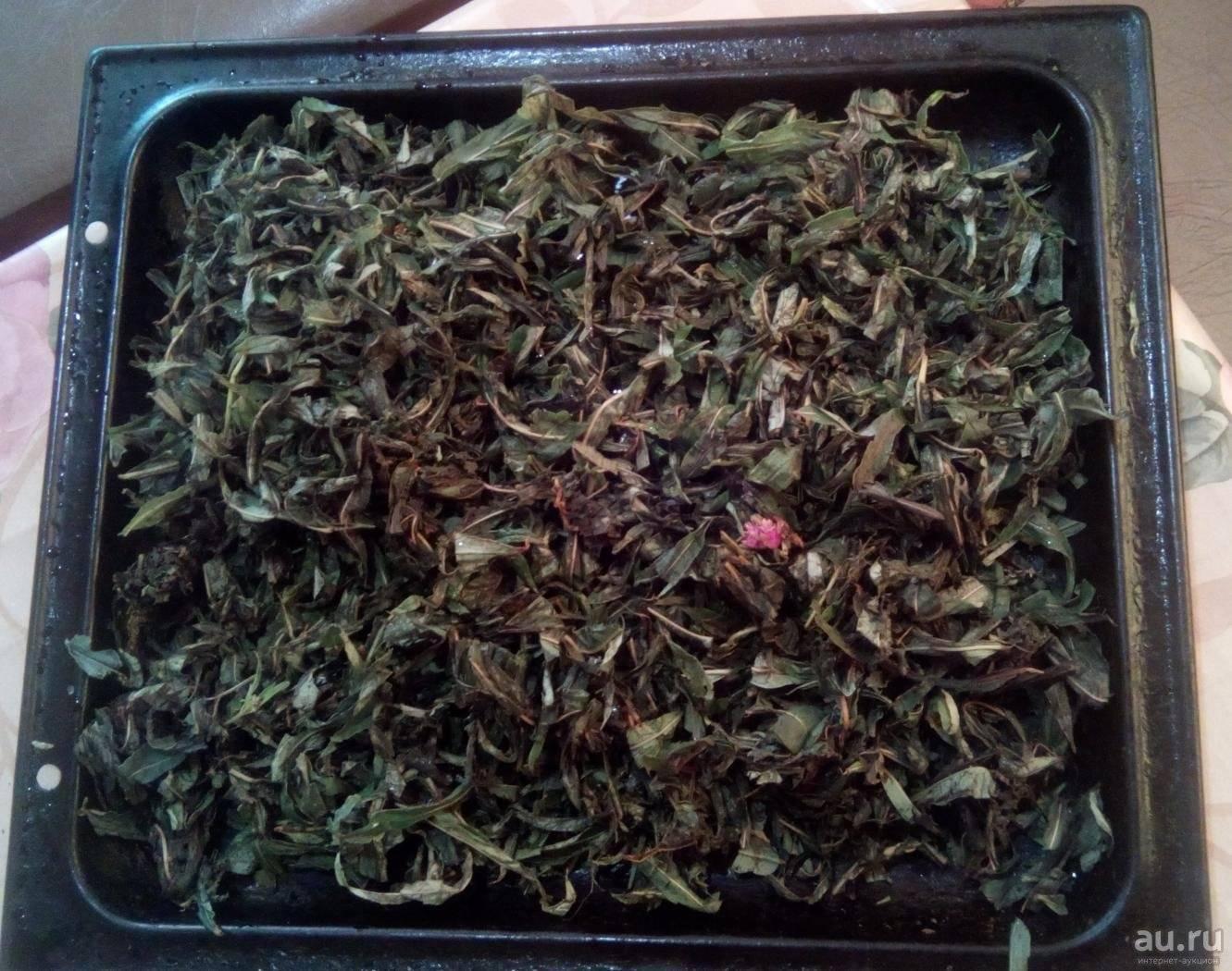 Иван-чай: как собирать и сушить и делать чай для здоровья всей семьи | народная медицина