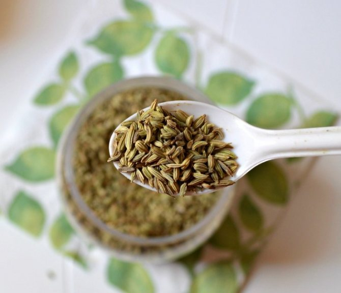 Все о полезных свойствах семян фенхеля: где применяются, чем полезны