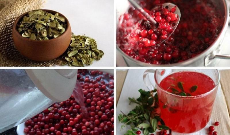 Брусничный чай: лечебные свойства ягоды и листьев