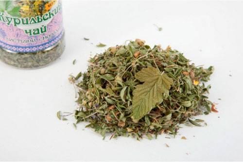 Курильский чай или лапчатка: как собирать и заваривать