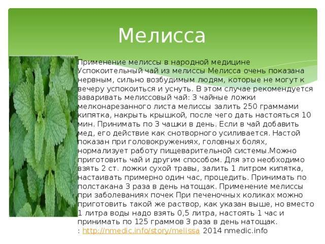 Чай с мятой − польза и вред