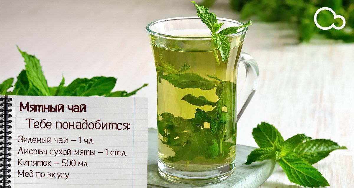 Чай с мелиссой при беременности - польза и вред